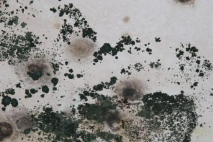Moisissure de surface dans la maison